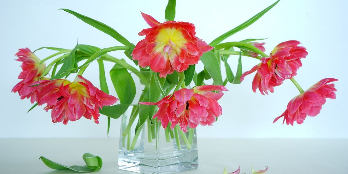 Jak Przedluzyc Trwalosc Kwiatow Cietych Wszystko O Florystyce